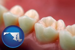maryland map icon and teeth and gums