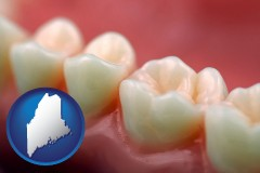 maine map icon and teeth and gums